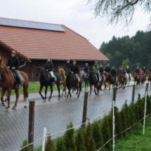 Pferdesegnung-2013-6