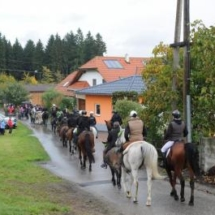 Pferdesegnung-2013-7