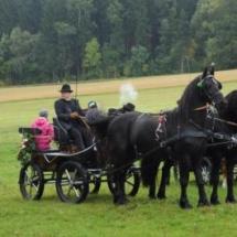 Pferdesegnung-2013-8