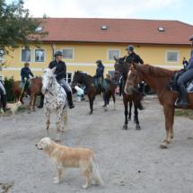 Pferdesegnung-2015-001