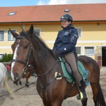 Pferdesegnung-2015-004