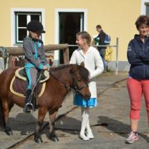 Pferdesegnung-2015-005