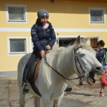 Pferdesegnung-2015-007
