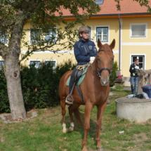 Pferdesegnung-2015-008