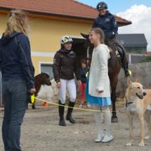 Pferdesegnung-2015-010