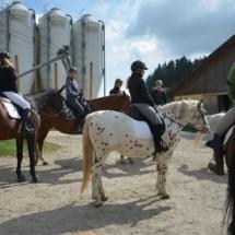 Pferdesegnung-2015-012