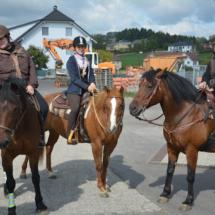 Pferdesegnung-2015-015