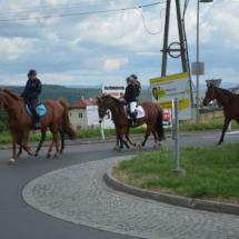 Pferdesegnung-2015-017