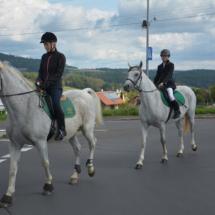 Pferdesegnung-2015-019