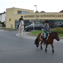 Pferdesegnung-2015-022
