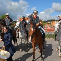 Pferdesegnung-2015-026