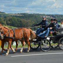 Pferdesegnung-2015-030