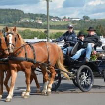 Pferdesegnung-2015-031