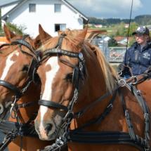 Pferdesegnung-2015-033