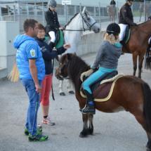 Pferdesegnung-2015-038