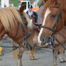 Pferdesegnung-2015-039