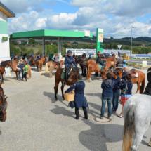 Pferdesegnung-2015-041