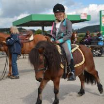 Pferdesegnung-2015-042