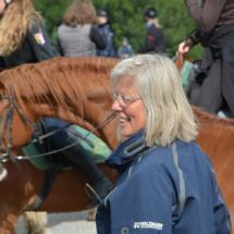Pferdesegnung-2015-043