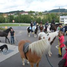 Pferdesegnung-2015-046