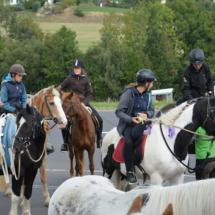 Pferdesegnung-2015-047