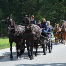 Pferdesegnung-2015-050