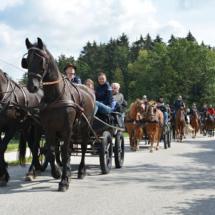 Pferdesegnung-2015-051