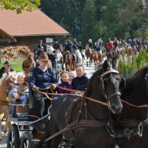 Pferdesegnung-2015-052