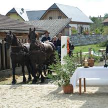 Pferdesegnung-2015-053