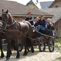 Pferdesegnung-2015-054