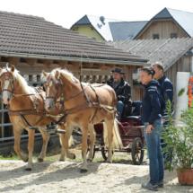 Pferdesegnung-2015-055