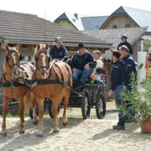 Pferdesegnung-2015-056