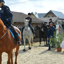 Pferdesegnung-2015-057