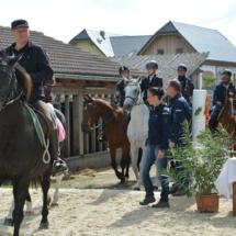 Pferdesegnung-2015-058