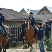 Pferdesegnung-2015-060