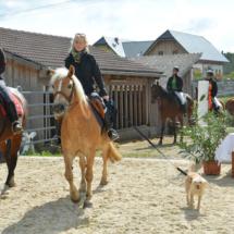 Pferdesegnung-2015-063