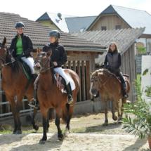 Pferdesegnung-2015-064