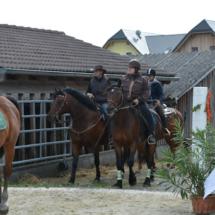 Pferdesegnung-2015-066