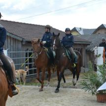 Pferdesegnung-2015-067