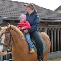 Pferdesegnung-2015-071