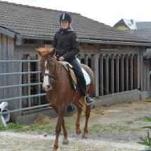 Pferdesegnung-2015-072