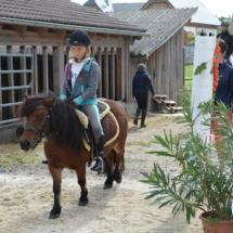 Pferdesegnung-2015-074