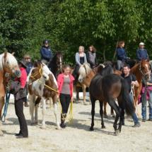 Pferdesegnung-2015-081