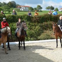 Pferdesegnung-2015-085
