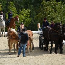 Pferdesegnung-2015-088