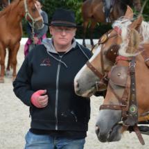 Pferdesegnung-2015-098