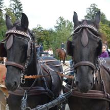 Pferdesegnung-2015-099