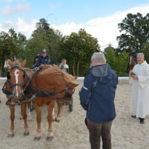 Pferdesegnung-2015-112