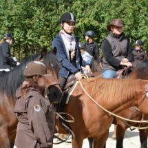 Pferdesegnung-2015-120
