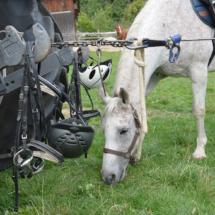 Pferdesegnung-2015-142